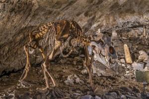 In den Rübeländer Tropfsteinhöhlen erforschen Kinder das Leben der tierischen Bewohner früher und heute. Foto: djd/Tourismusbetrieb der Stadt Oberharz am Brocken - Rübeländer Tropfsteinhöhlen
