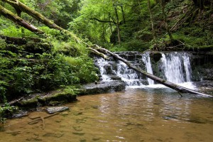 """Eine überwältigende Urlandschaft mit romantischen Wasserfällen und urwüchsigen Wäldern erlebt man auf dem """"Genießerpfad Gauchachschlucht"""". Foto: djd/Rad- und WanderParadies Schwarzwald und Alb"""