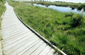 """Ein Holzbohlenweg führt durch das Hochmoor """"Ewiges Meer"""". Foto: djd/Tourismus GmbH Gemeinde Dornum"""