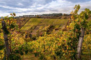 Weingegenden sind nicht nur Regionen, an denen der köstliche Rebensaft entsteht. Weingegenden sind zudem immer auch landschaftlich außergewöhnlich reizvoll. Foto: djd/Frankens Saalestück