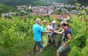 Beim Weinwandern kann man sich mit qualitativ hochwertigen Weinen belohnen. Foto: djd/Frankens Saalestück