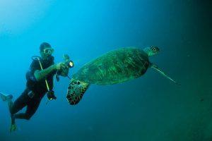 Faszinierende Natur erwartet den Oman-Urlauber auch unter Wasser: Schnorchler und Taucher schätzen die Möglichkeiten ganz besonders. Foto: djd/Sultanate of Oman