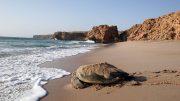 Die weiten Strände, angenehme Temperaturen zu jeder Jahreszeit und die vergleichsweise kurze Anreise mit dem Flugzeug machen Oman zum angesagten Trend-Reiseziel. Foto: djd/Sultanate of Oman