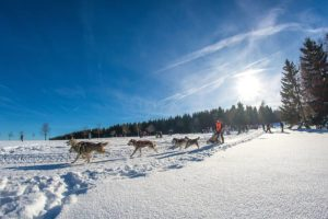 Bei den abenteuerlichen Husky-Schlittentouren kommt es auf den Teamgeist zwischen Mensch und Hund an. Foto: djd/Tourismusbetrieb der Stadt Oberharz am Brocken - Rübeländer Tropfsteinhöhlen