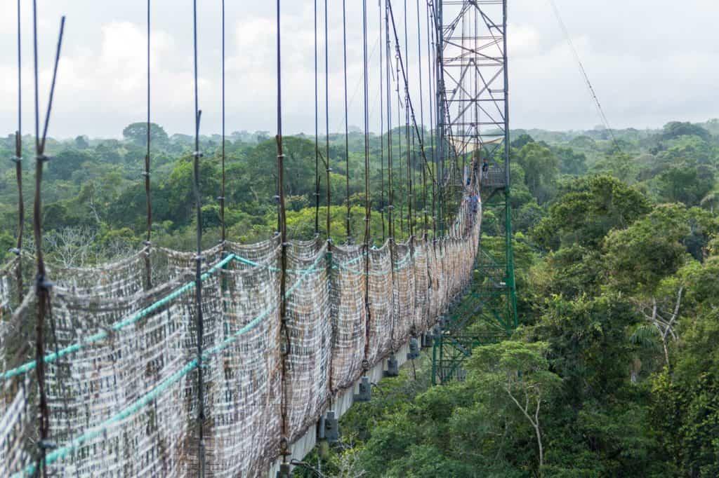 Blick über den Urwald in Ecuador